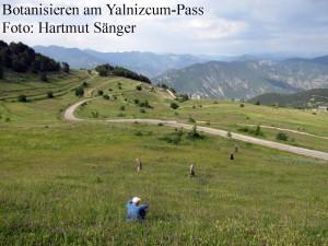 Botanisieren am Yalnizcum-Pass